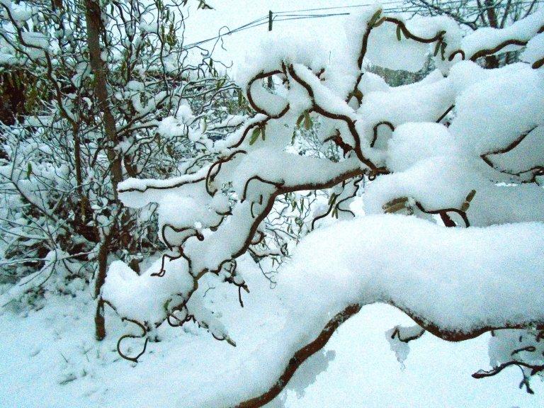 snow 132