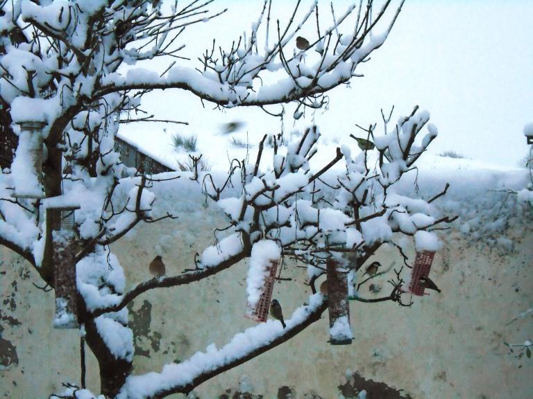 snow 170