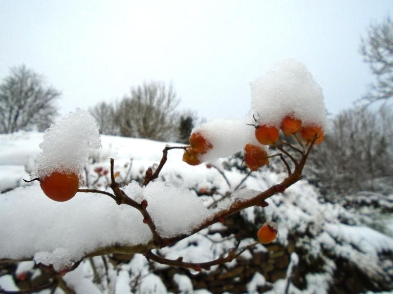 snow 2 015