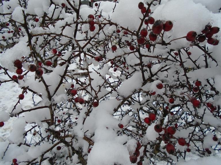 snow 2 061
