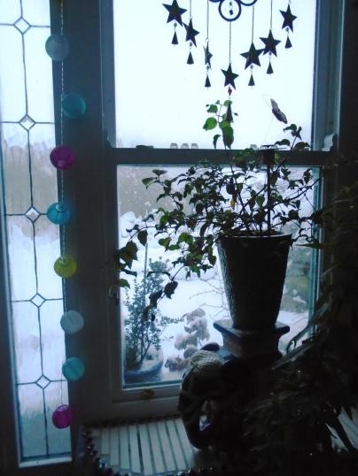 snow 176
