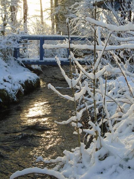 February snow 135