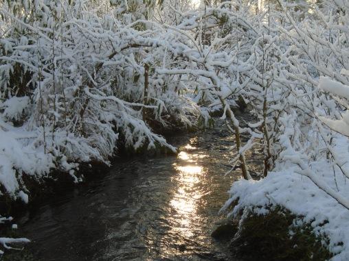 February snow 158
