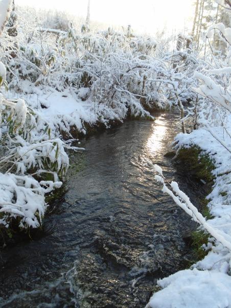February snow 160