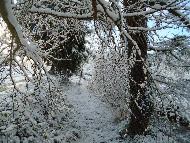 February snow 202
