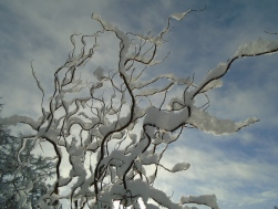 February snow 255