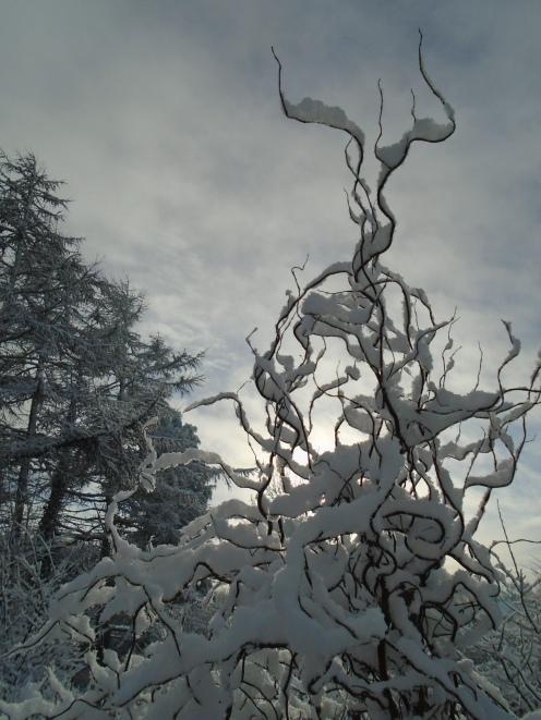 February snow 263
