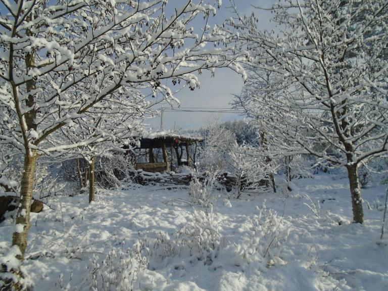 February snow 281