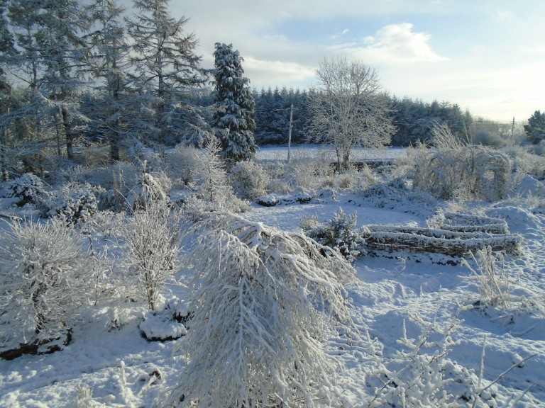 February snow 302