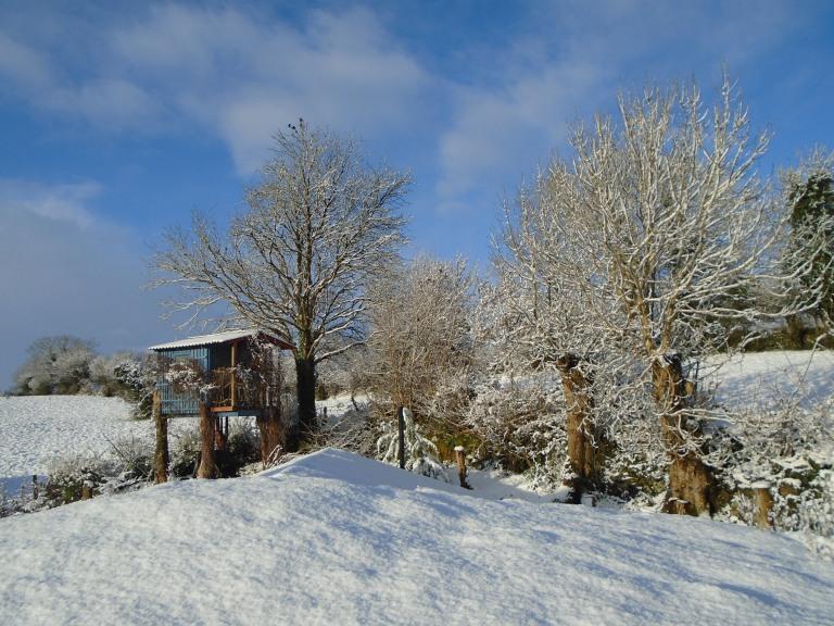 February snow 310