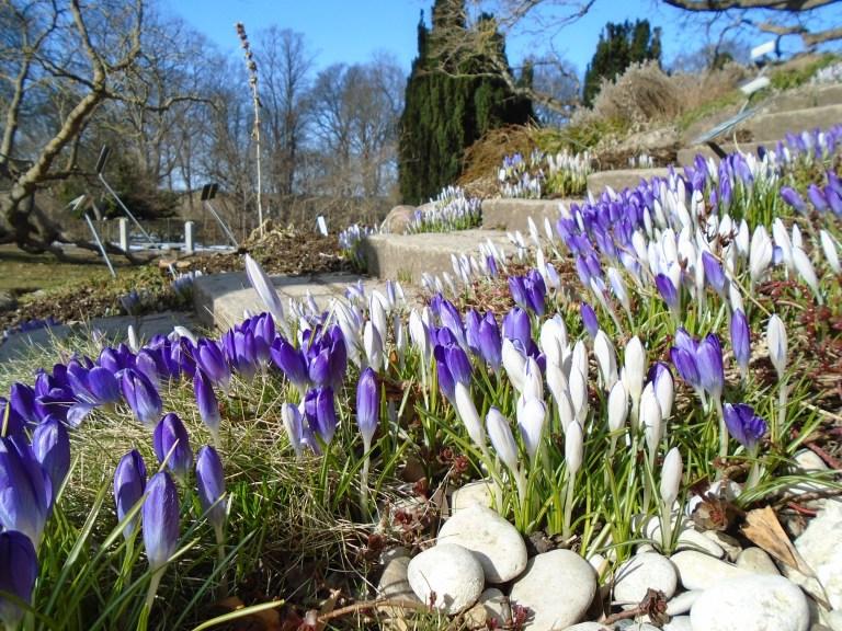 Botanical gardens 080