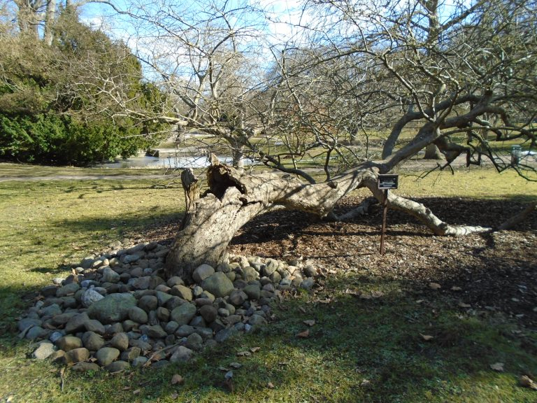 Botanical gardens 142
