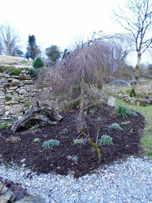 community garden 25th of Feb 056