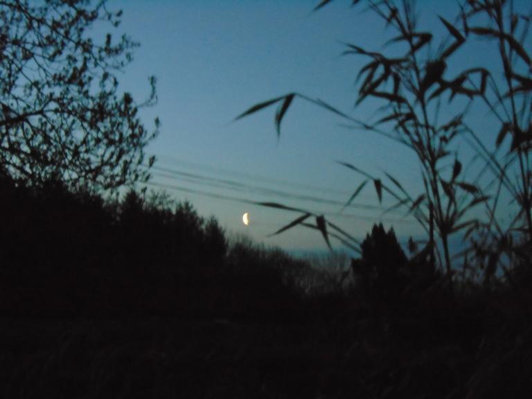 dawn 035