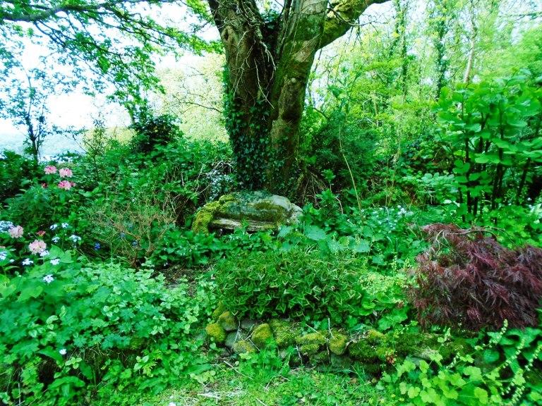 Rose garden 115