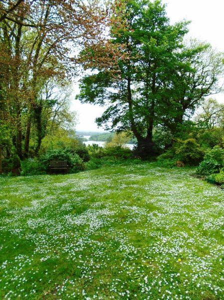 Rose garden 138