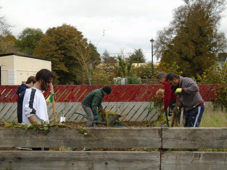 october community garden 035