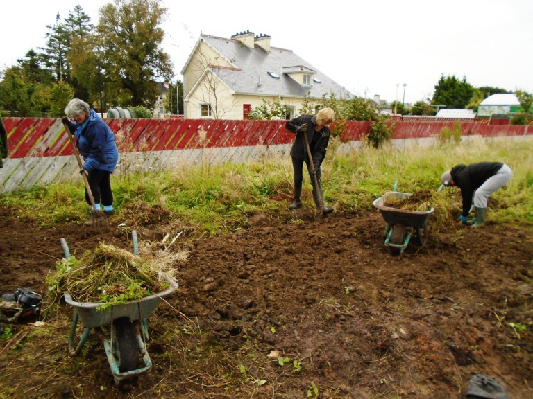 succulents and community garden 083
