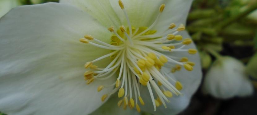Floral notes inDecember.