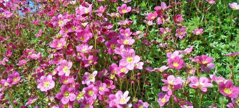Spring Colour.